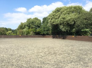 Horse Riding Lesson at WIllowbrook Riding Centre