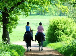Horse Hacking at Willowbrook Riding Centre