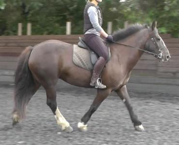 Marlene - Horse for Sale 2