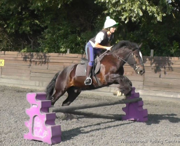 Horse jumping at Willowbrook Riding Centre West Sussex