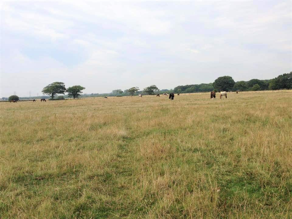 Fields at Willowbrook Riding Centre in Chichester, West Sussex near Hampshire