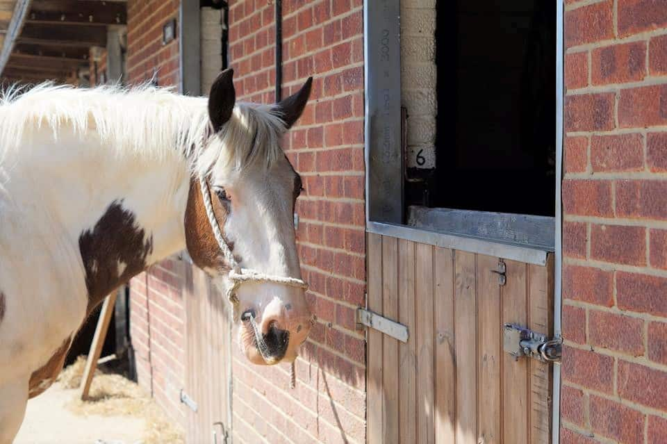 Horse Riding Yard at Willowbrook in Chichester and West Sussex