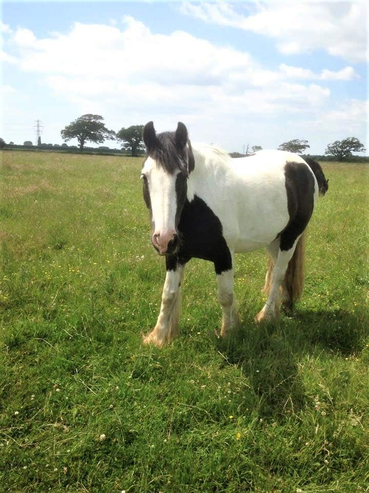 Horse in a field at Willowbrook Equestrian Centre