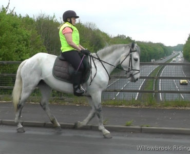 Jill horse for sale in chichester