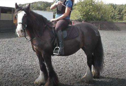Elvis horse in the school