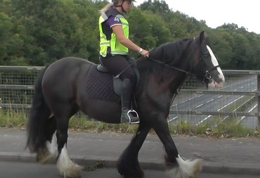 Traditional cob mare in the road