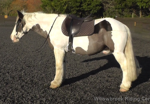 Puzzle horse for sale