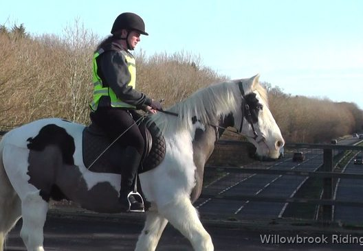 Puzzle horse for sale from Willowbrook Cobs